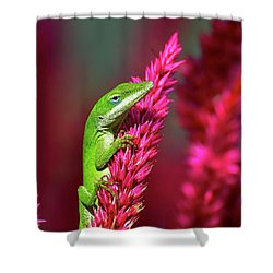 Pretty In Pink Shower Curtain by Kathy Baccari