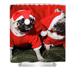 Pugs Dressed As Father Christmas Shower Curtain