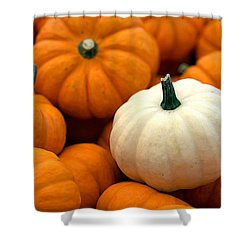 Pumpkins Shower Curtain by Joseph Skompski