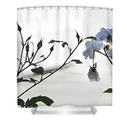 Shower Curtain featuring the photograph Pure by Jocelyn Friis