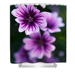 Purple Beauties Shower Curtain