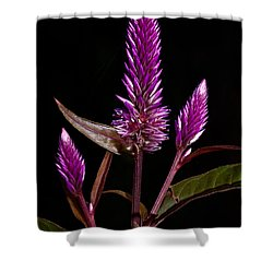 Purple Shower Curtain by Christopher Holmes
