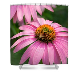 Shower Curtain featuring the photograph Purple Coneflower by Jim Hughes