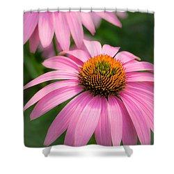 Purple Coneflower Shower Curtain by Jim Hughes