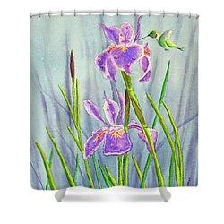 Purple Dutch Iris And Hummer Shower Curtain by Kathryn Duncan