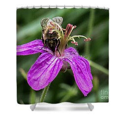 Purple Flower 3 Shower Curtain