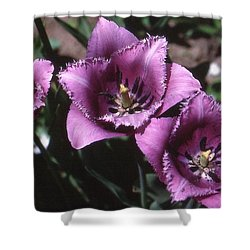 Purple Flowers Two  Shower Curtain by Lyle Crump