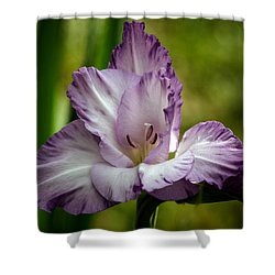 Shower Curtain featuring the photograph Purple Glad by Robert Bales