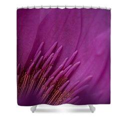 Purple Haze Shower Curtain