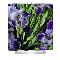 Purple Iris Shower Curtain by Diane Lent
