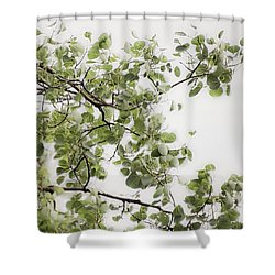 Rainy Day Birch - Shower Curtain