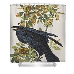 Raven Shower Curtain by John James Audubon