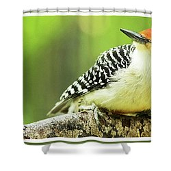 Red Bellied Woodpecker, Male, Animal Portrait Shower Curtain