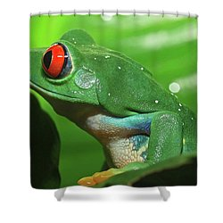 Red Eyed Tree Frog Shower Curtain