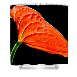 red Lily blossom Shower Curtain by Werner Lehmann