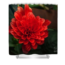 Red Shower Curtain by Nancie DeMellia