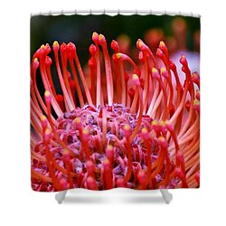 Red  Pincushion Protea Shower Curtain