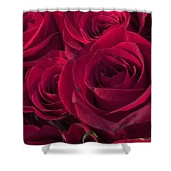 Shower Curtain featuring the photograph Red Red Roses by Kay Gilley