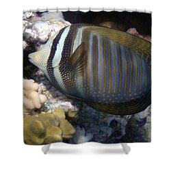 Red Sea Sailfin Tang  Shower Curtain