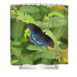 Shower Curtain featuring the photograph Red Spotted Purple Butterfly by Sandy Keeton