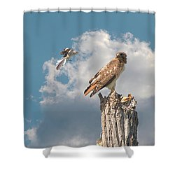 Red-tailed Hawk And Mockingbird Dispute Shower Curtain