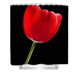 Red Tulip No. 1  - By Flower Photographer David Perry Lawrence Shower Curtain