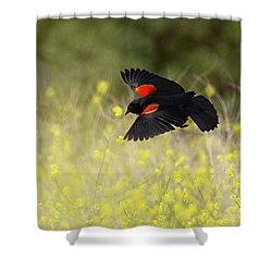 Red Winged Blackbird In Flight Shower Curtain