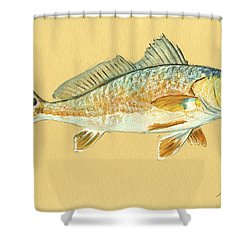 Redfish Painting Shower Curtain by Juan  Bosco