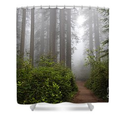 Redwood Grove Shower Curtain