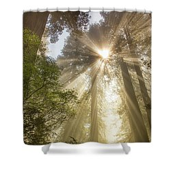 Redwoods Sunburst Shower Curtain