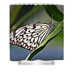 Rice Paper Butterfly 8 Shower Curtain