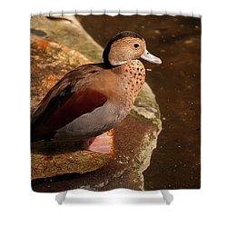 Shower Curtain featuring the photograph Ringed Teal On A Rock by Chris Flees