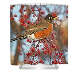 Shower Curtain featuring the photograph Robin.. by Nina Stavlund