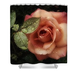 Romancing The Rose Shower Curtain by Richard Cummings
