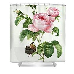 Rosa Centifolia Shower Curtain by Pierre Joseph Redoute