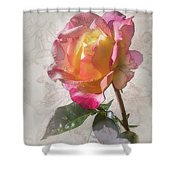 Rosa, 'glowing Peace' Shower Curtain