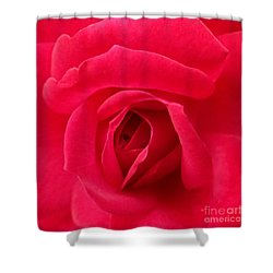 Rose Shower Curtain by A K Dayton