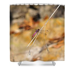 Shower Curtain featuring the photograph Fuchsia Fly by Al Powell Photography USA