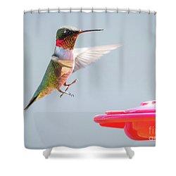 Ruby-throated Hummingbird  Shower Curtain by Ricky L Jones