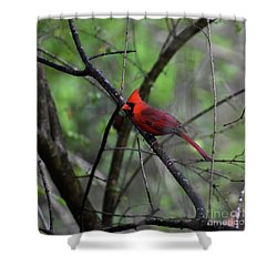 Shower Curtain featuring the photograph Saint Louis by Skip Willits