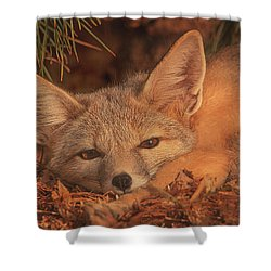 San Joaquin Kit Fox  Shower Curtain by Brian Cross
