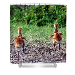 Shower Curtain featuring the photograph Sandhill Crane Chicks 000 by Chris Mercer