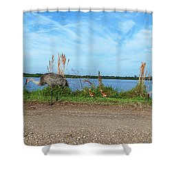 Shower Curtain featuring the photograph Sandhill Crane Family  by Chris Mercer