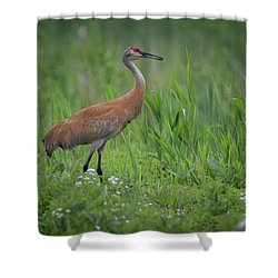 Sandhill Crane Shower Curtain by Gary Hall
