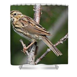 Savannah Sparrow Shower Curtain