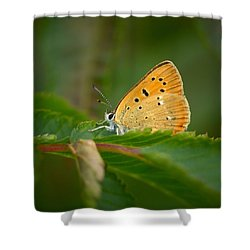 Shower Curtain featuring the photograph Scarce Copper by Jouko Lehto