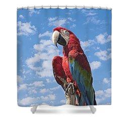 Scarlet Macaw Shower Curtain by Kim Hojnacki