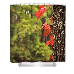 Scenic Elder Lake Shower Curtain