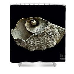 Sea Debris B Shower Curtain by Walt Foegelle