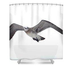 Sea Gull Shower Curtain